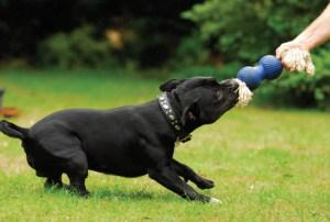 dog_play01