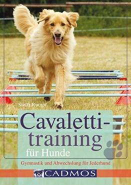 Cavalettitraining für Hunde: Gymnastik und Abwechslung