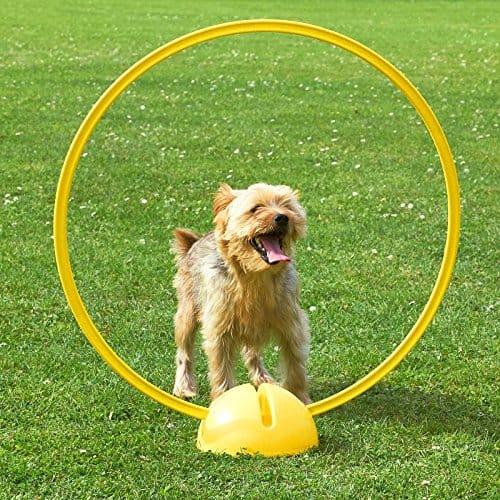 f/ür Agility-Training in 4 Farben gelb Superhund24 4 x Kombi-Kegel 50 mit Kombi-Ring 70 cm