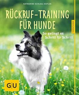 Rückruf Training für Hunde: So gelingt es Schritt für Schritt