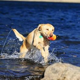 ChuckIt' Amphibious Shark Wasser Ball schwimmfähig mit Mütze