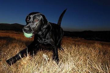 ChuckIt Leuchtender Wurfball für Ihren Hund