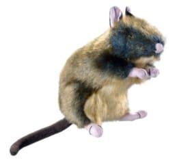 Hunter Wildlife Ratte